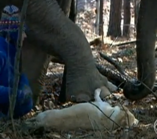 elephant dog tara bella sanctuary