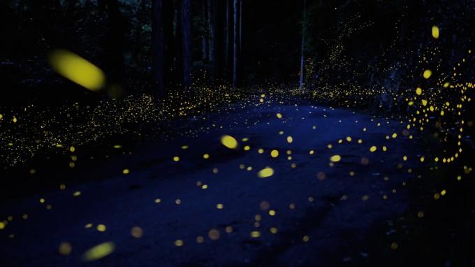 fireflies Yuki Karo