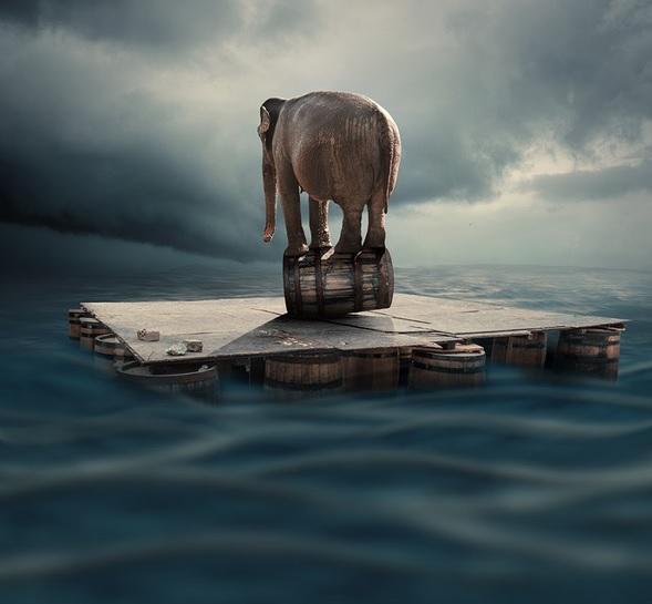 elephant on a barrel