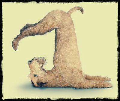 puppy dog shoulder stand