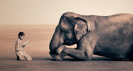 teach elephant