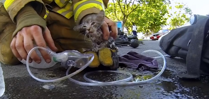 firefighter saves kitten