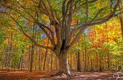 organic beautiful tree