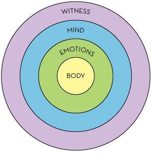 steve circles wilberian diagram