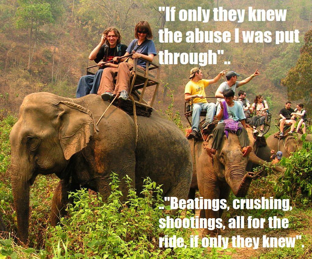 elephants tourism animals rights