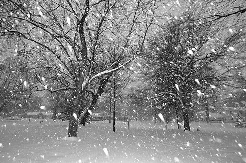 snow storm winter blizzard