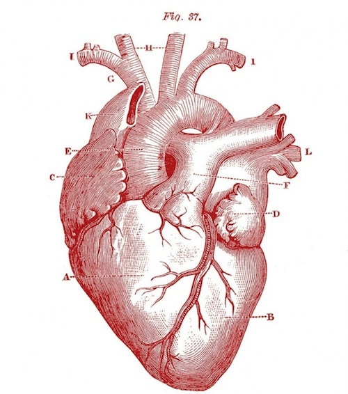 http://thegraphicsfairy.com/wp-content/uploads/2013/02/Royalty-Free-Images-Anatomy-Heart-GraphicsFairy-red1.jpg