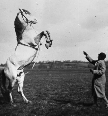horse_woman_rearing_bw