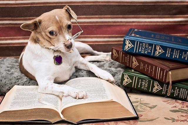 Studydogbigger