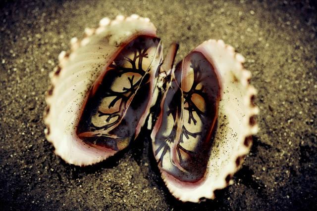 lungs art shell breathe