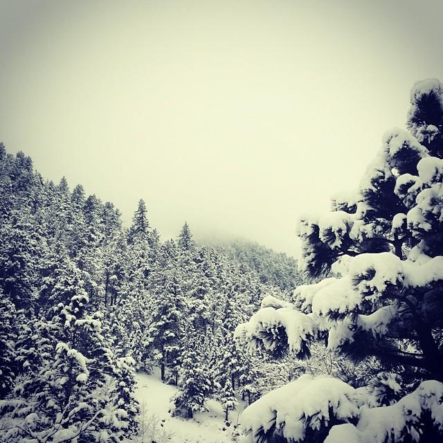 snow winter waylonlewis