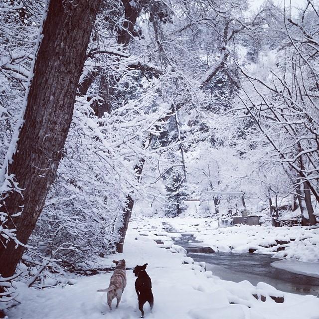 redford dog snow hike boulder winter waylonlewis
