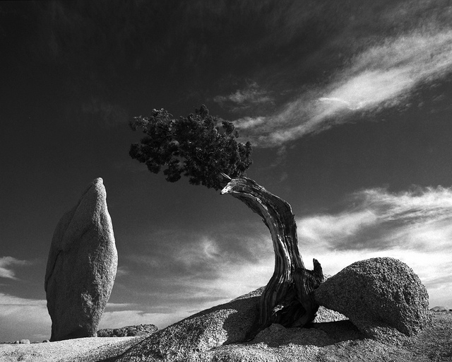 balance rock and juniper black and white