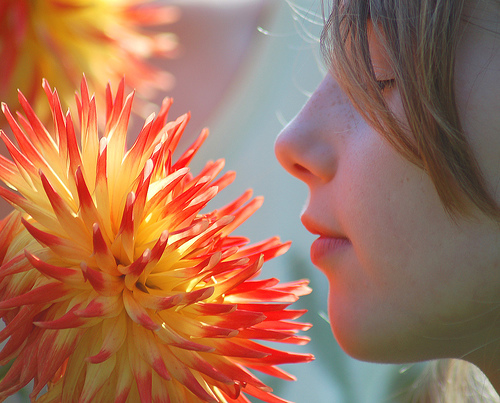 smell flower summer present moment