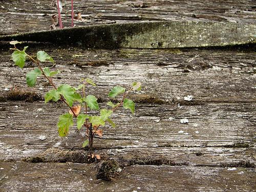 growingrotting
