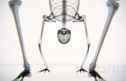 yoga skeleton 2