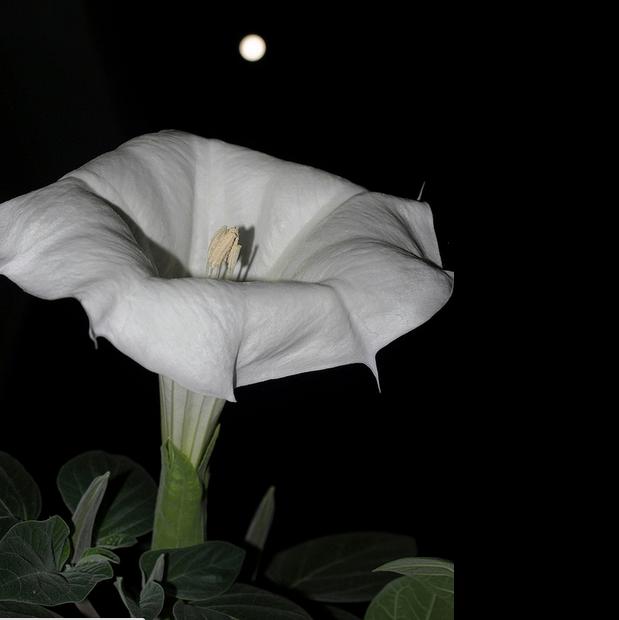 Moonllower