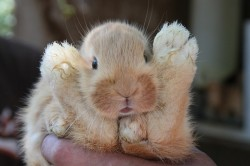 Rabbit arms up bunny easter