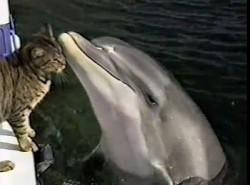 cat-dolphin2