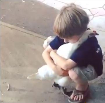 chicken hug