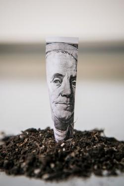 money cash planting tree wealth riches