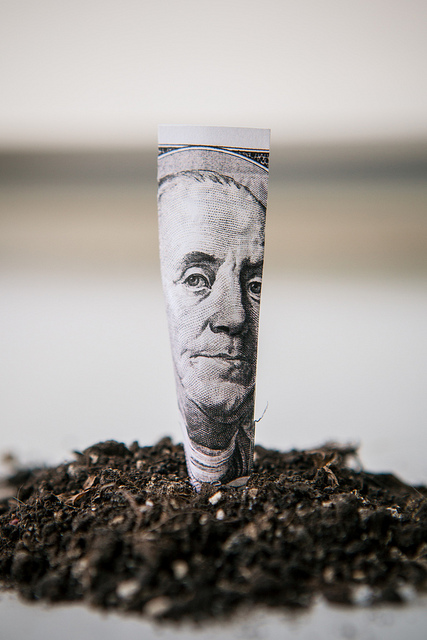 money cash planting tree wealth riches