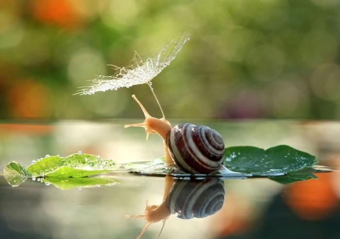 http://www.demilked.com/macro-photography-snails-vyacheslav-mishchenko/