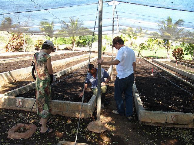urban farming cuba garden