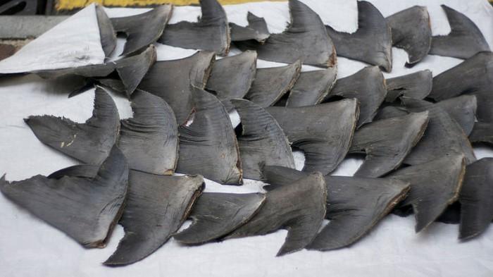 photo: http://commons.wikimedia.org/wiki/File:Shark_fins_Hong_Kong.jpg