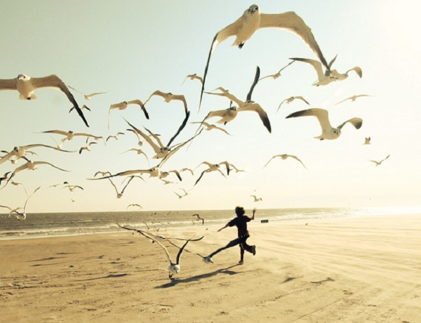 Running With Seagulls