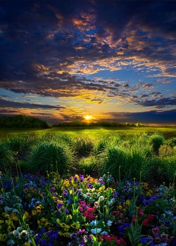 field flowers sunset