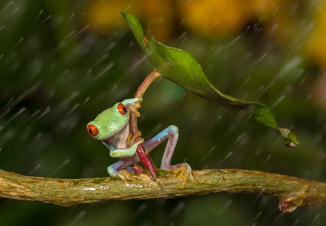funnierfrogpic