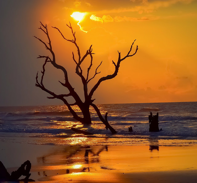 gold beach tree sunset