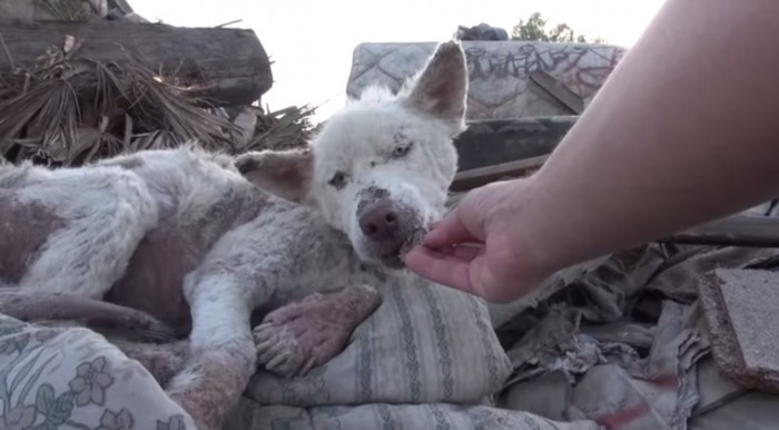 homeless dog youtube screenshot
