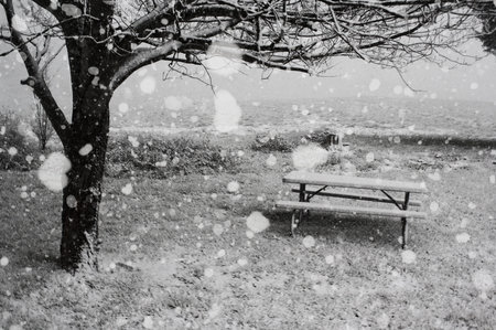 Beauty in Present Moment park bench, snow, tree