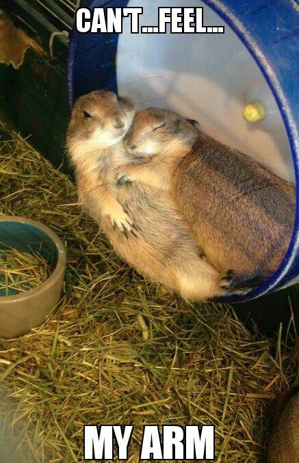 cuddle snuggle