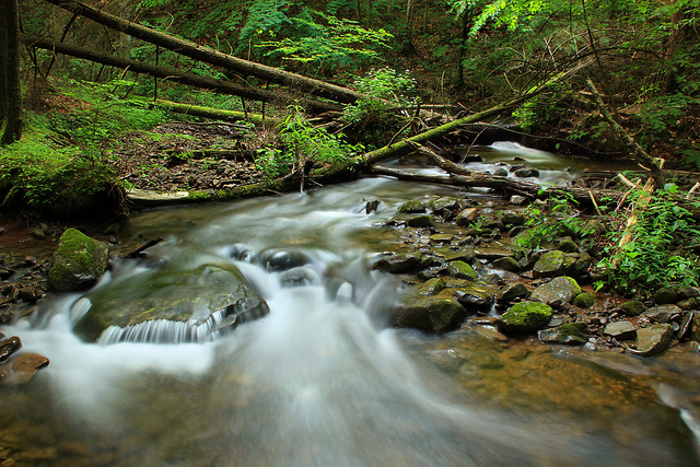 river flow water rocks forest