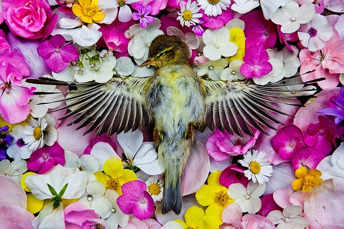 Dead Bird in Flowers