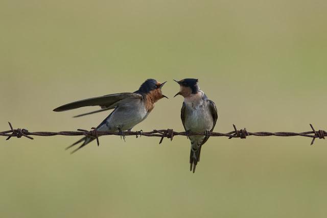 birdsyelling