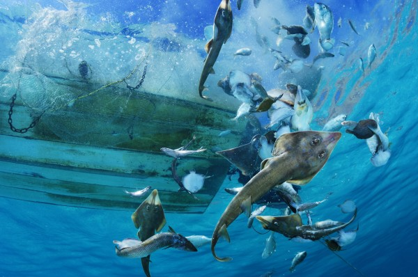 Bycatch Overboard, by Brian Skerry