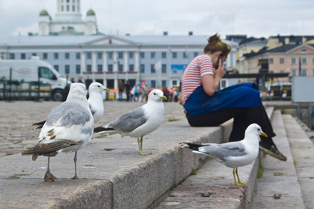 phone birds sit outside