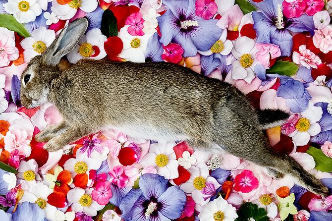 Dead Rabbit in Flowers