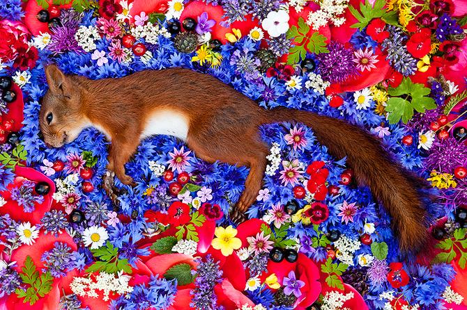 Dead Squirrel in Flowers