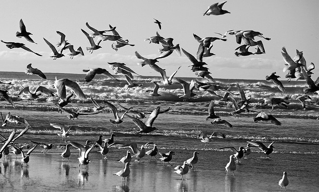 Ian Sane/Flickr