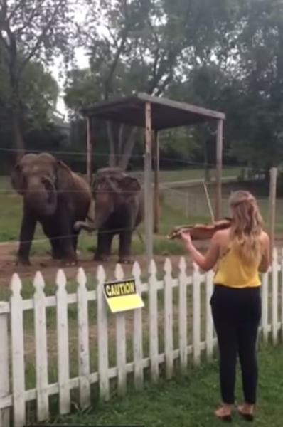Dancingelephanties