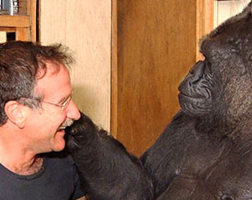 Robin Williams meets Koko