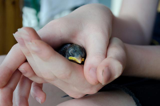 holding bird