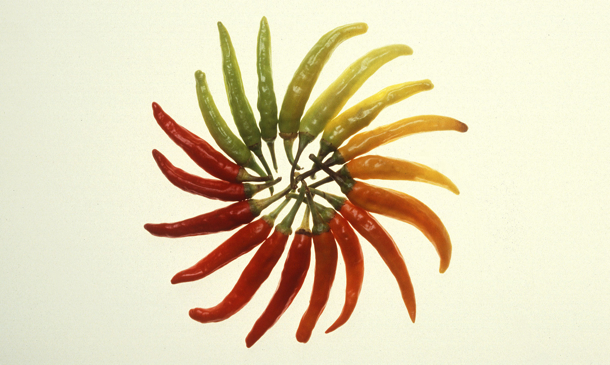 http://commons.wikimedia.org/wiki/File:Charleston_Hot_peppers_usda_original.jpg
