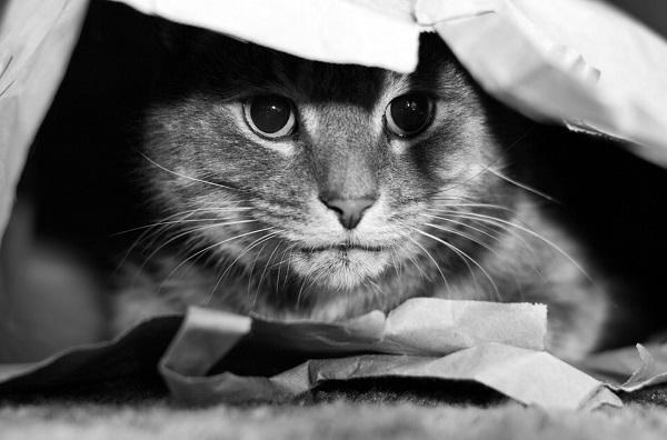 Hiding Pet Cat