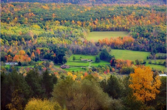 autumn, fall, leaves, change